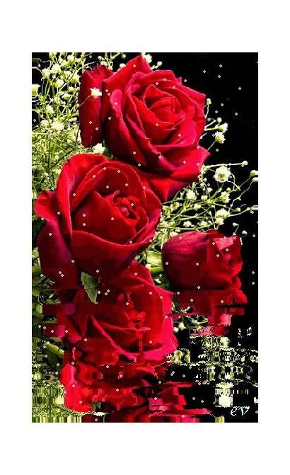Flowers Rosas Roses Gifs Wonderful Rose Flower