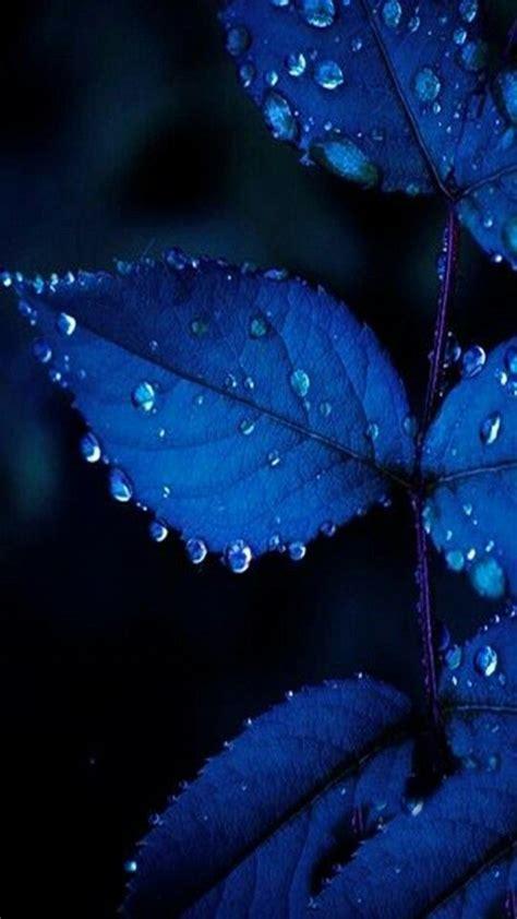 leaves plant flower rain raindrop storm