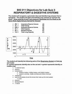 34 Label The Digestive System Quiz