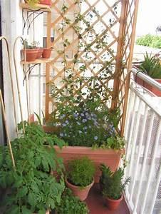 Support Plantes Grimpantes : design exterieur brise vent balcon support bois plantes ~ Dode.kayakingforconservation.com Idées de Décoration