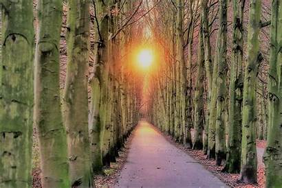 Tree Lined Sunset Road