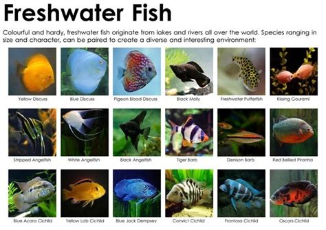 examples  freshwater fish quora