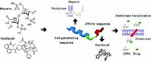 Design Of Novel Cell Penetrating Peptide R7