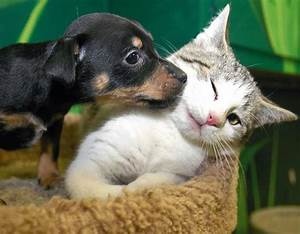 Dogs-Cats | Loving Moments In Photos | Funny And Cute Animals