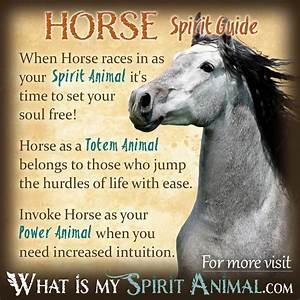 Horse Symbolism & Meaning | Spirit, Totem, & Power Animal