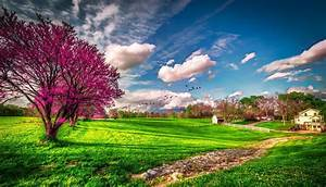 31+ HD Spring Wallpapers, Backgrounds, Images
