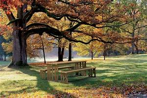 5, Tips, For, Designing, The, Perfect, Picnic, Area