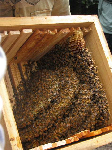 Backyard Beehive  Ordinary 2 Extraordinary