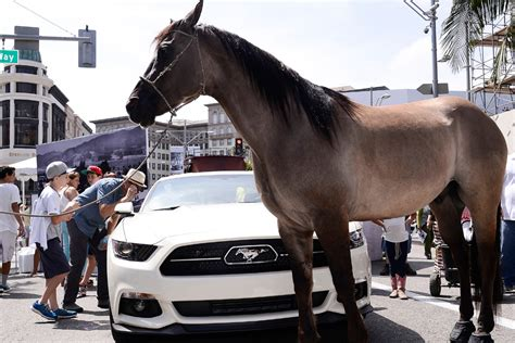 How Much Horsepower Does a Horse Have? | Engaging Car News ...