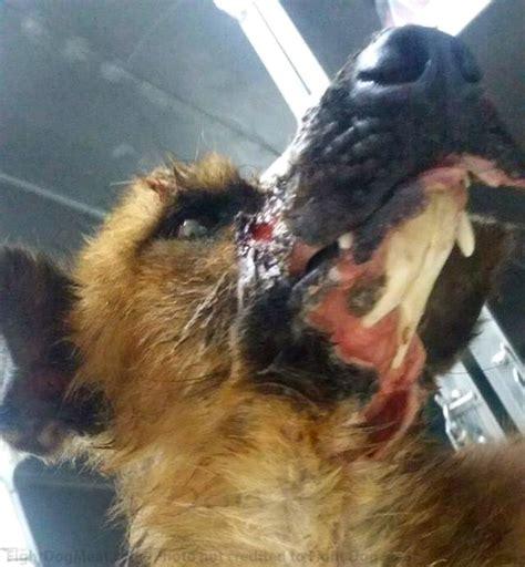 update vietnam mo dog meat survivor  fight dog meat