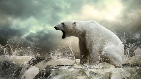 wallpaper polar bear ice roar ocean animals