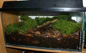 Pflanzen Terrarium Einrichten : grundkurs terraristik datz terrarienb cher bunte ~ Watch28wear.com Haus und Dekorationen