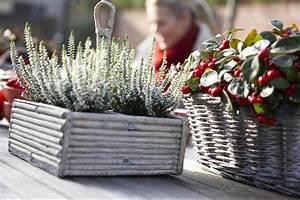 Plantes D Hiver Extérieur Balcon : plantes vertes pour balcon et terrasse en hiver ~ Nature-et-papiers.com Idées de Décoration