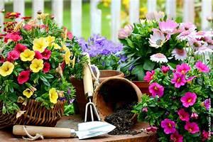 ready set garden who39s green With katzennetz balkon mit essential garden parfum