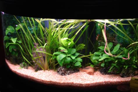 mon aquarium 120 litres aquarium et
