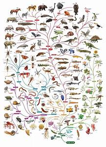 Follow Evolution And Explore The Variety Of Life On The