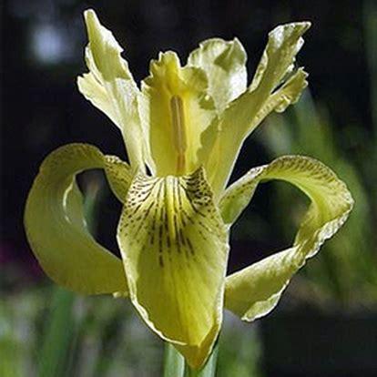 donkerpaarse bloemen 1 20 m coolplants buitengewone en bijzondere soorten bij coolplants