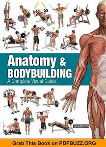 Anatomy  U0026 Bodybuilding A Complete Visual Guide  Weightliftingcompetition  Workoutinspiration