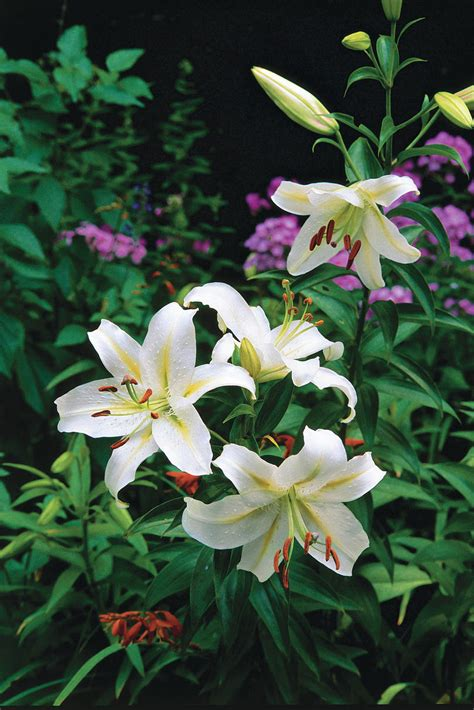 The South's Best Fragrant Plants For Your Garden