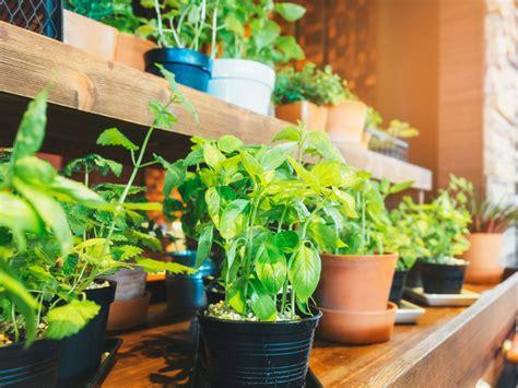 edible garden ideas  growing indoor fruit