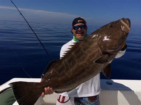 grouper florida fishing keys fish delphfishing catches weekly key west