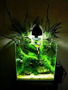 Optimale Aquarium Temperatur : 167 best planted nano aquariums images on pinterest ~ Yasmunasinghe.com Haus und Dekorationen