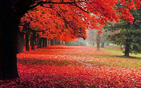 permalink  fruehling sommer herbst winter