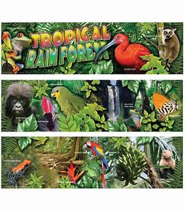 Rainforest Animal Collage Pictures to Pin on Pinterest ...