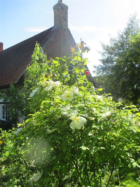Remembering The Old Ways  Days In Our English Cottage Garden