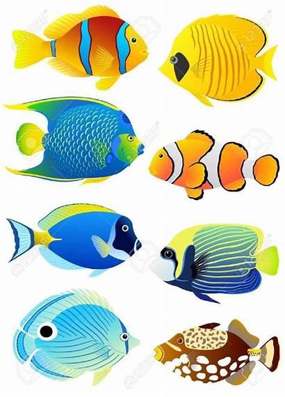 Fish Tropical Colorful Meowlogy Cartoon Drawing