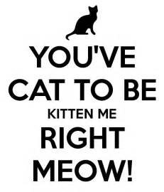 you ve cat to be kitten me right meow keep calm and