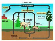 Best 25 ideas about carbon cycle find what youll love label carbon cycle diagram ccuart Choice Image