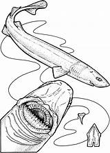 Shark Coloring Pages Cutter Cookie Gharial Teeth Drawing Hungry Evolution Animals Printable Designlooter Under Side Snakes Scales Getdrawings Getcolorings 752px sketch template