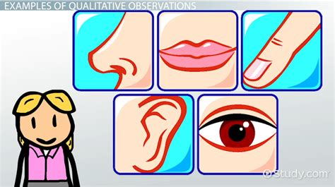 what is qualitative observation definition exle lesson transcript study