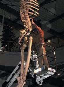 Giant Skeleton Ecuador