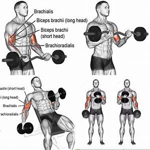 Gain Biceps Mass