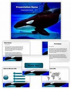 professional killer whale editable powerpoint template With killer powerpoint templates