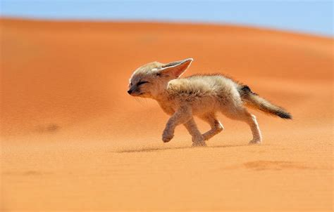 breathtaking wildlife pictures  beautiful foxes