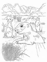 Gopher Coloring Pages Printable sketch template
