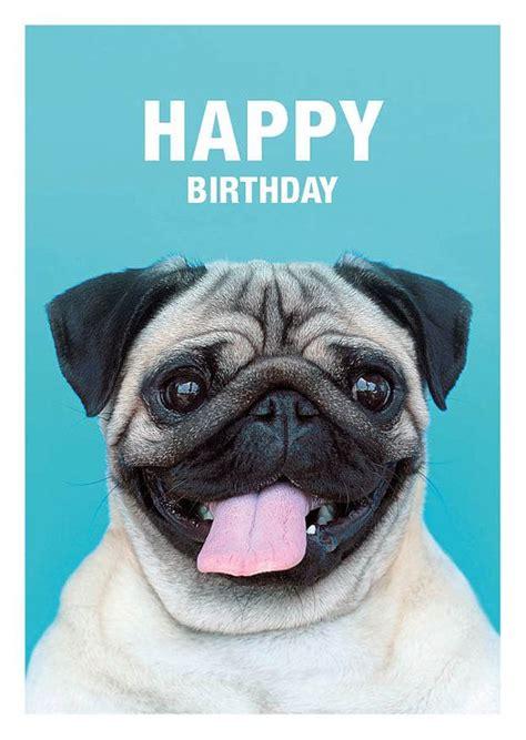 Happy Birthday Pug Meme - image gallery happy birthday pug funny