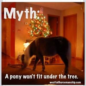 659 best Equest... Funny Christmas Horse Quotes
