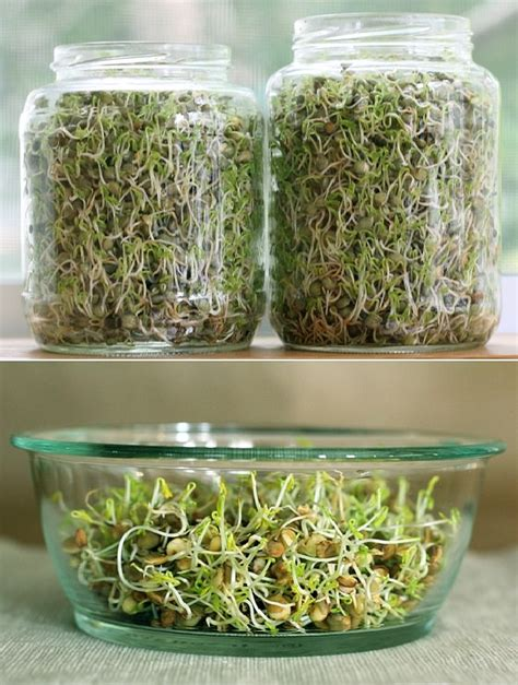 Best Windowsill Vegetables by Windowsill Vegetable Gardening 11 Best Vegetables To