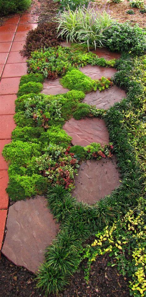 sedums  decorative  paving stones great fillers
