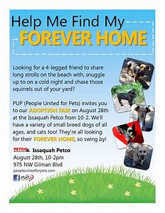 pup dog rescue flyers portfolio michelle walls With dog adoption flyer template