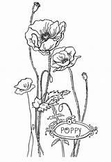 Coloring Pages Flower Poppy Printable Flowers Google Sheets Rocks Bestcoloringpagesforkids Ru цветок мак поиск рисунок sketch template