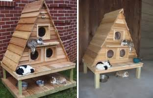 cat building 10 amazing cat structures neatorama