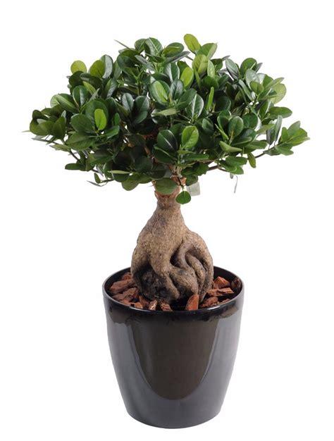 bonsa 239 artificiel arbre miniature ficus panda ginseng plante artificielle d int 233 rieur h 60 cm