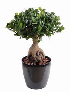 Arbre D Intérieur : bonsa artificiel arbre miniature ficus panda ginseng plante artificielle d 39 int rieur cm ~ Preciouscoupons.com Idées de Décoration