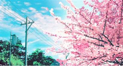 Cherry Blossom Giphy