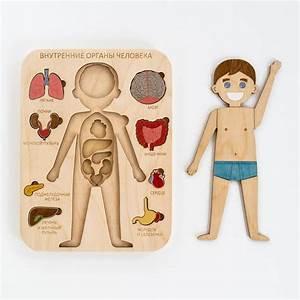 Human Body Wooden Internal Organs Montessori Anatomy Game